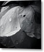 Dark Flower 22 Metal Print