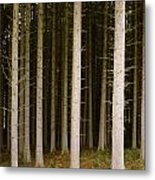 Dark Forest At Kielder Metal Print