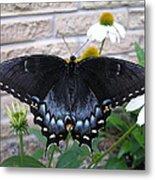 Dark Form Female Tiger Swallowtail Metal Print