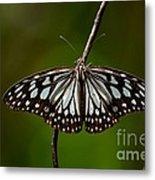 Dark Glassy Tiger Butterfly On Branch Metal Print