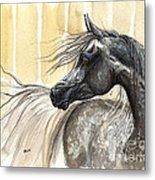 Dark Grey Arabian Horse 2014 02 17 Metal Print