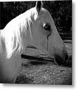 Dark Horse 2 Metal Print by Chasity Johnson