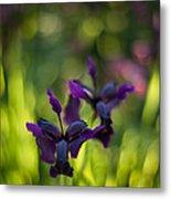 Dark Irises Metal Print