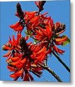 Dark Orange Coral Blossom Metal Print