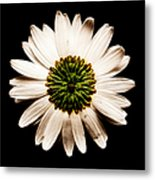 Dark Side Of A Daisy Square Fractal Metal Print