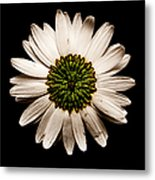 Dark Side Of A Daisy Square Metal Print