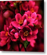 Dark Spring Dreams Metal Print