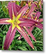 Dark Star Daylilies Metal Print