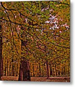 Darker Textured Autumn Trees Metal Print