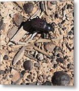 Darkling Beetle And Moqui Marbles Metal Print
