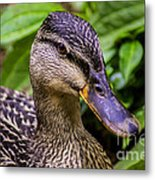 Darling Duck Metal Print