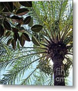 Date Palm And Rubber Tree Branch Metal Print