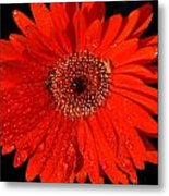 Datta What Have We Given Metal Print