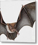 Daubentons Bat Myotis Daubentonii - Murin De Daubenton-murcielago Ribereno-vespertilio Di Daubenton Metal Print by Urft Valley Art