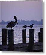 Dawn Brings Hungry Birds Metal Print