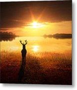 Dawn's Golden Light Metal Print