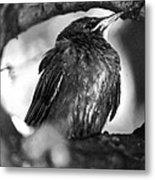 Dax's Bird Metal Print