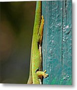 day geckos from Madagascar 1 Metal Print