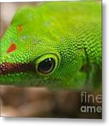 Day Geicko Metal Print