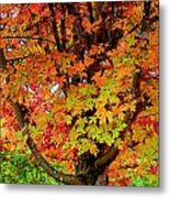 Day Glo Autumn Metal Print