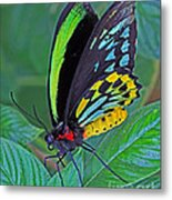 Day-glo Butterfly Metal Print