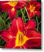 Day Lilies Metal Print by Adam Romanowicz