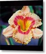 Day Lilly 02 Metal Print