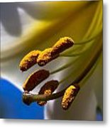 Day Lilly Macro With Sky Background Metal Print by Sven Brogren