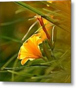 Day Lily Backlit Metal Print
