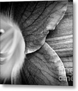 Day Lily Detail - Black And White Metal Print