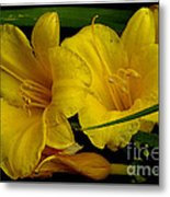Day Of The Lilies  Metal Print