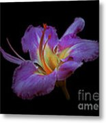 Daylily Bloom In The Dark Metal Print by ImagesAsArt Photos And Graphics