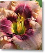 Daylily Collection # 14 Metal Print