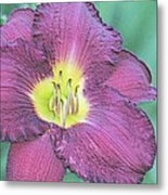 Daylily Collection #26 Metal Print