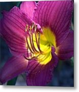 Daylily Metal Print by Edward Hamilton