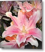 Pink Daylily In Bloom Metal Print