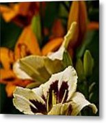 Daylily Picture 487 Metal Print