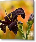Daylily Picture 514 Metal Print