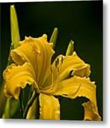 Daylily Picture 539 Metal Print