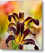 Daylily Picture 541 Metal Print