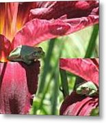 Daylily Shade For A Tree Frog Metal Print