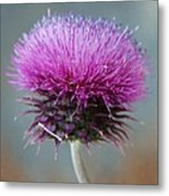 Dazzling Thistle Beauty Metal Print