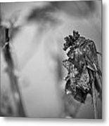 Dead And Dark Metal Print
