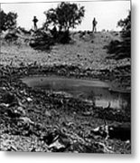 Dead Cattle Contaminated Water Hole Once In 100 Year's Drought Near Sells Arizona Tohono O'odham  Metal Print