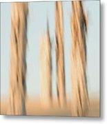Dead Conifer Trees In Sand Dunes Metal Print