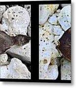 Dead Fish Lives 5a Metal Print