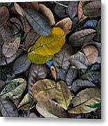 Dead Leaves Metal Print