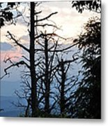 Dead Pines Along The Parkway Metal Print