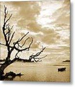 Dead Tree And Sea Metal Print