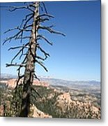 Dead Tree At Bryce Canyon  Overlook Metal Print